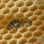 Minding our BeesWax