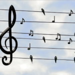 Universal Harmony